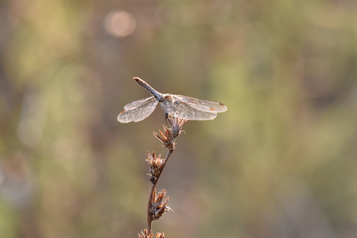 beautiful photo, dragonfly, lacewing, metamorphosis, wildlife, arthropod, nature, insect, outdoors, animal