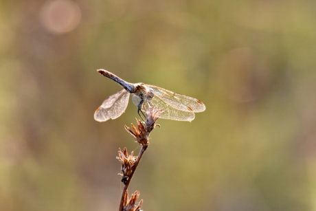 beautiful photo, dragonfly, lacewing, insect, nature, outdoors, wildlife, arthropod, animal, entomology