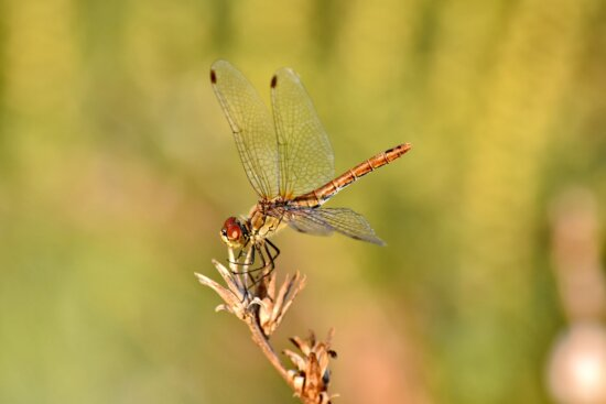 beautiful photo, close-up, dragonfly, head, wings, invertebrate, nature, outdoors, insect, arthropod