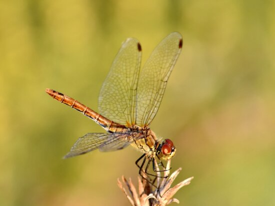 bug, close-up, lacewing, macro, outdoors, arthropod, insect, dragonfly, nature, invertebrate