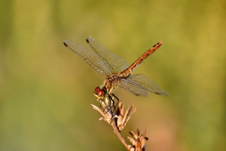 beautiful photo, details, dragonfly, entomology, insect, lacewing, macro, metamorphosis, wildlife, arthropod