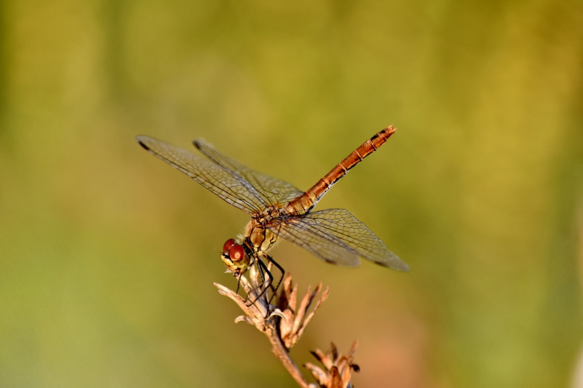 dragonfly, head, legs, metamorphosis, wings, outdoors, invertebrate, insect, nature, arthropod