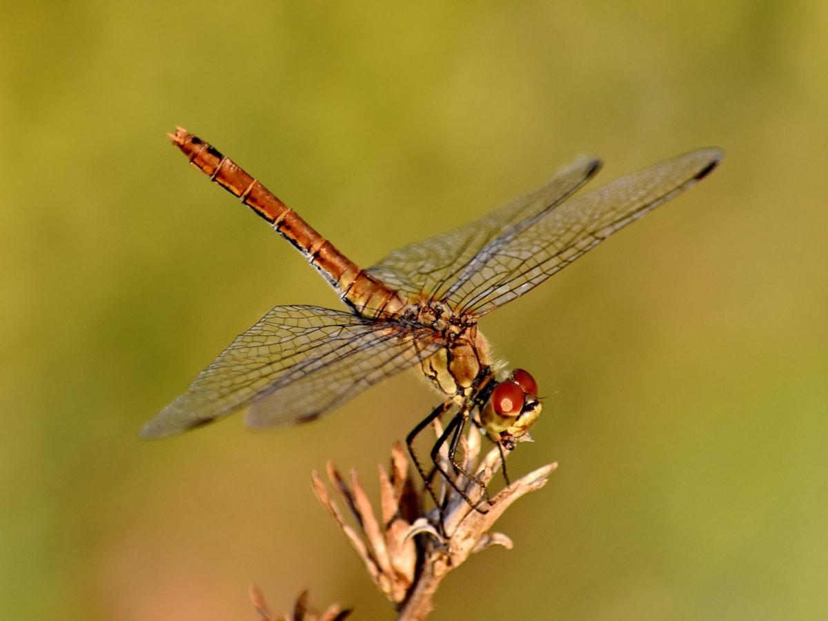 beautiful photo, details, dragonfly, eyes, head, wildlife, animal, animals, arthropod, biology