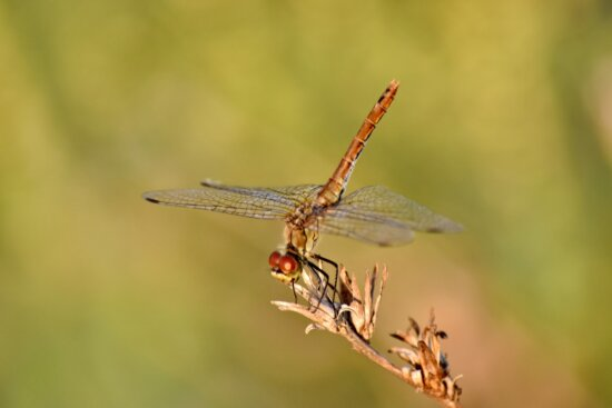 animal, beautiful photo, biology, details, dragonfly, environment, insect, outdoors, arthropod, invertebrate