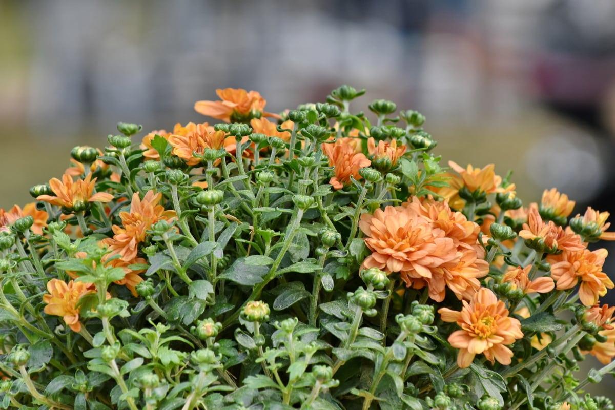 ぼかし, 花束, 花, オレンジ黄色, ブルーム, 自然, 春, フローラ, 花, 工場