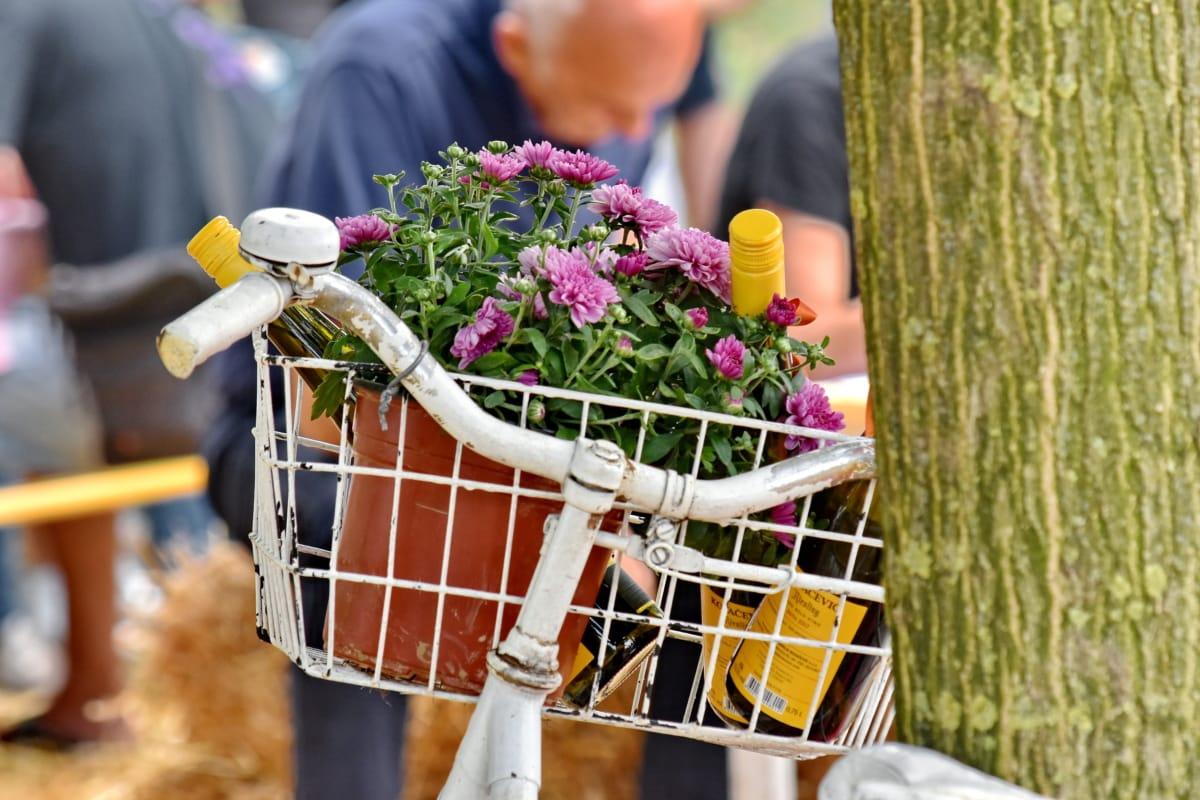 bicicleta, garrafas, vinho tinto, ainda vida, flores, ao ar livre, comida, Verão, natureza, mulher