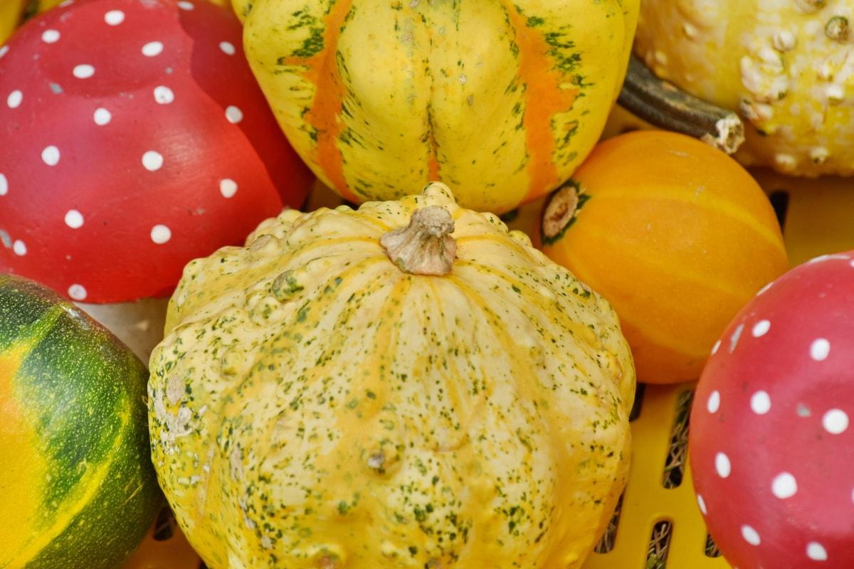 виробляють, сквош, Осінь, рослинні, жнива, гарбуз, здоров'я, харчування, Хеллоуїн, смачні