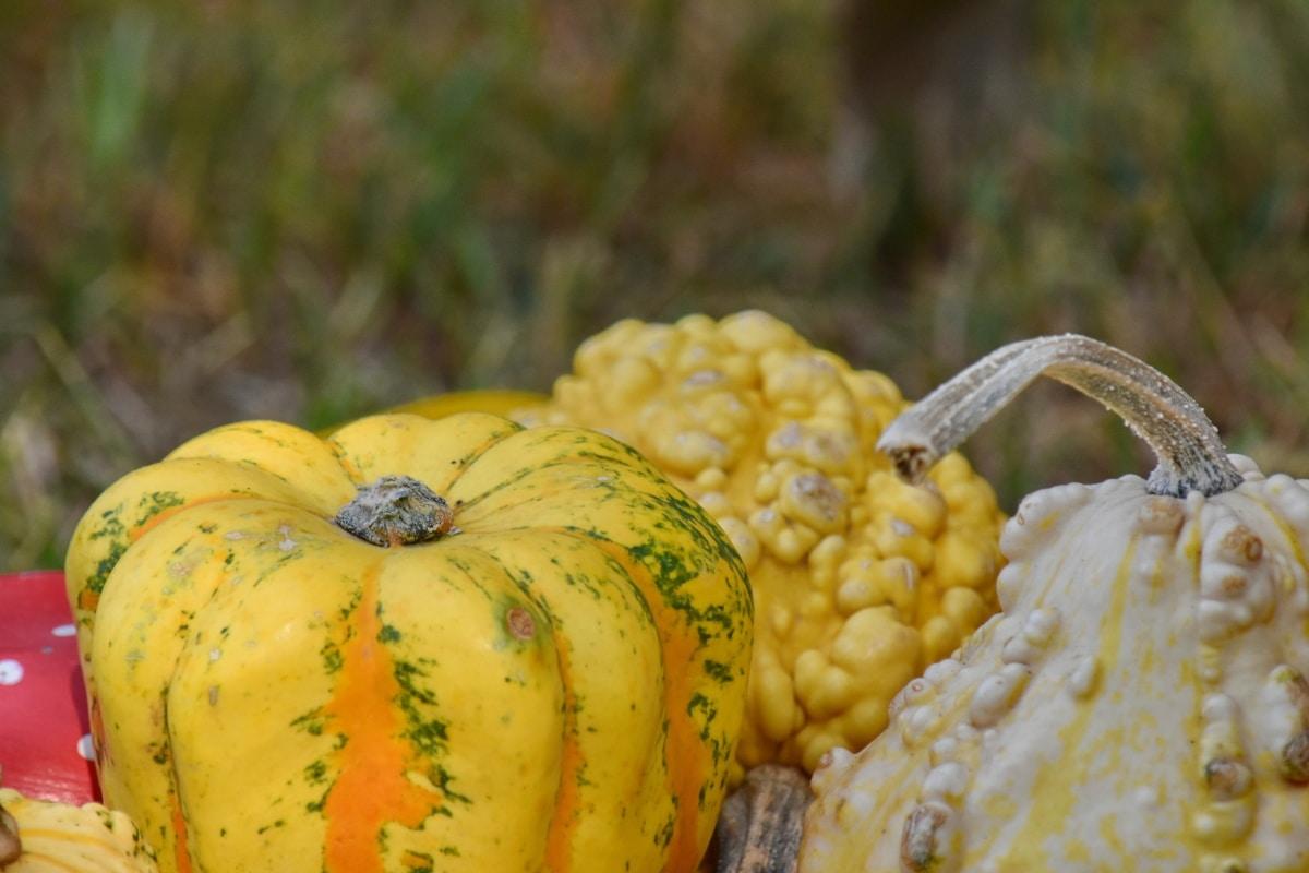 izbliza, šareno, bundeva, jesen, hrana, žetva, povrća, proizvesti, priroda, list