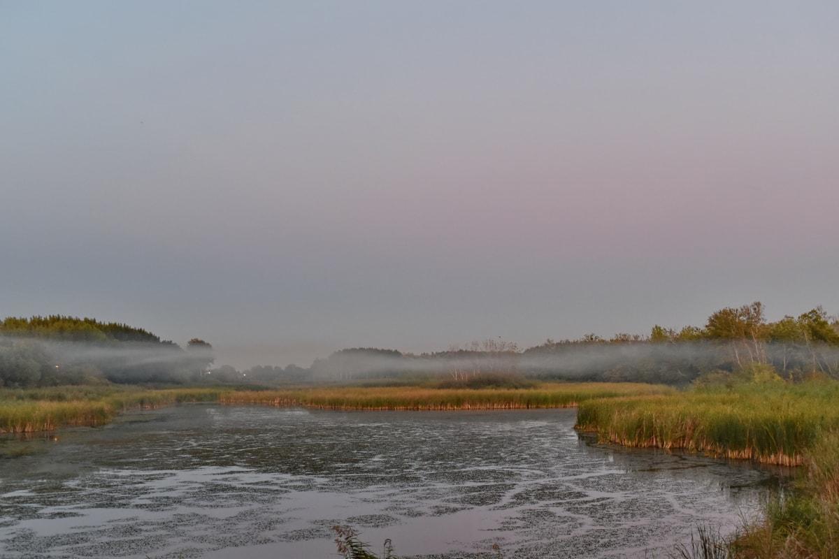 aquatic plant, evening, fog, marshlands, swamp, landscape, water, shoreline, lake, reflection