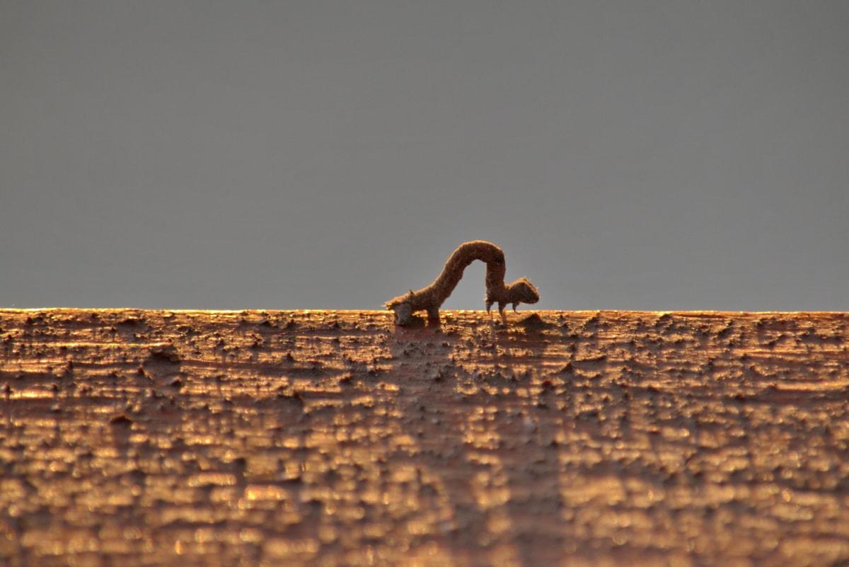 crawl, dusk, insect, larva, movement, nature, wildlife, worm, wood, outdoors