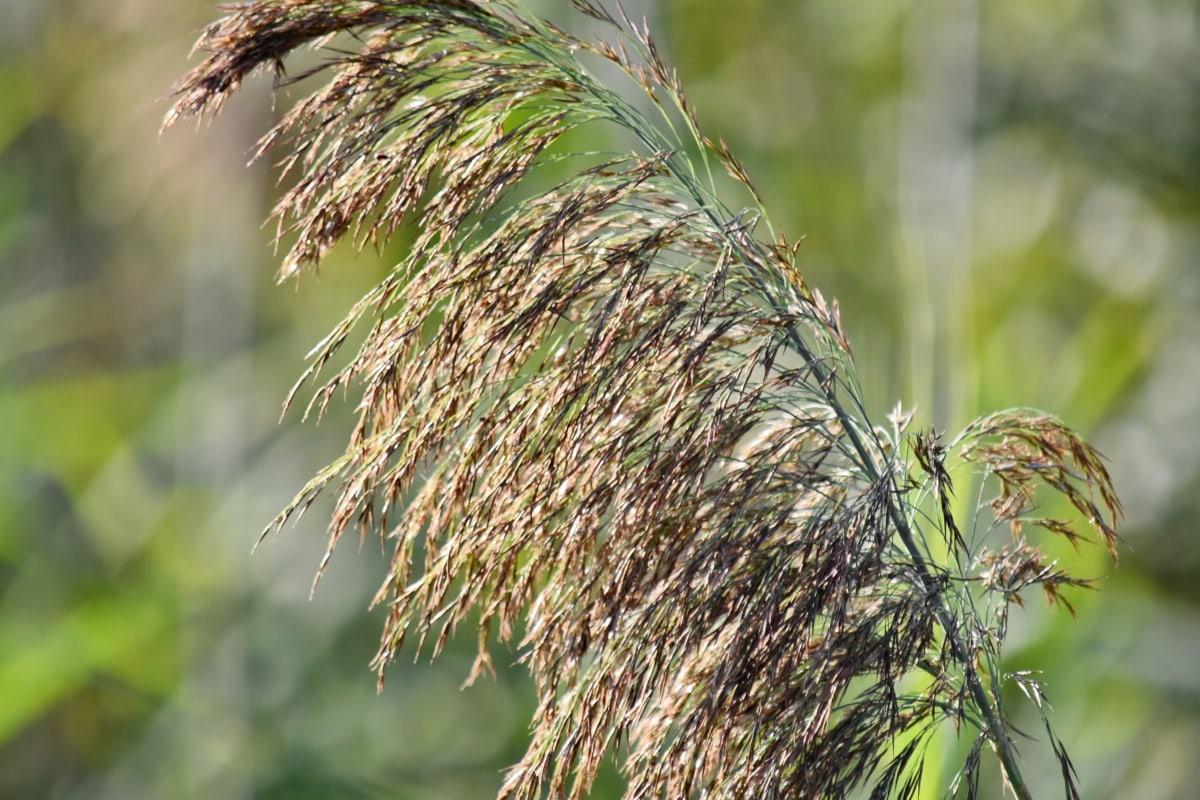 herbe, haute, terrain marécageux, l'été, plante, nature, domaine, été, feuille, flore