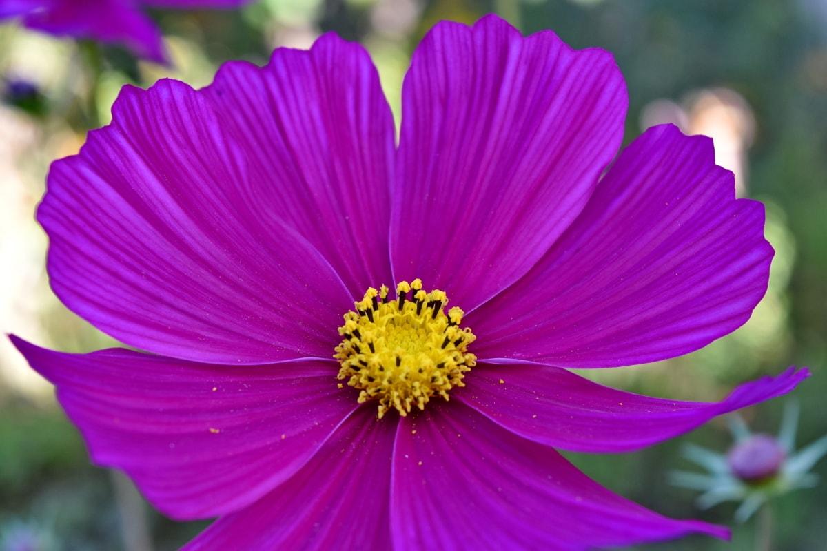 mooie bloemen, prachtige foto, bloemblaadjes, zomerseizoen, plant, zomer, natuur, roze, bloem, flora