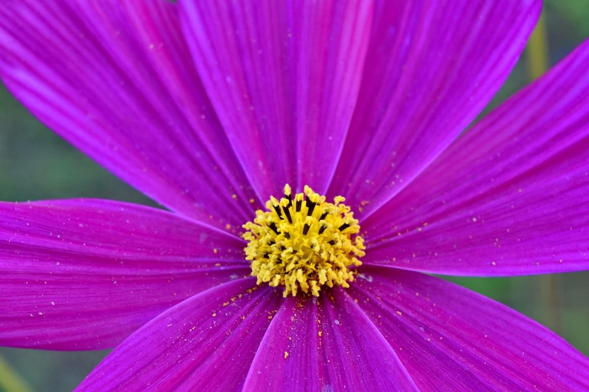botani, detail, bunga, bunga liar, satwa liar, alam, kelopak, bunga, cerah, musim panas