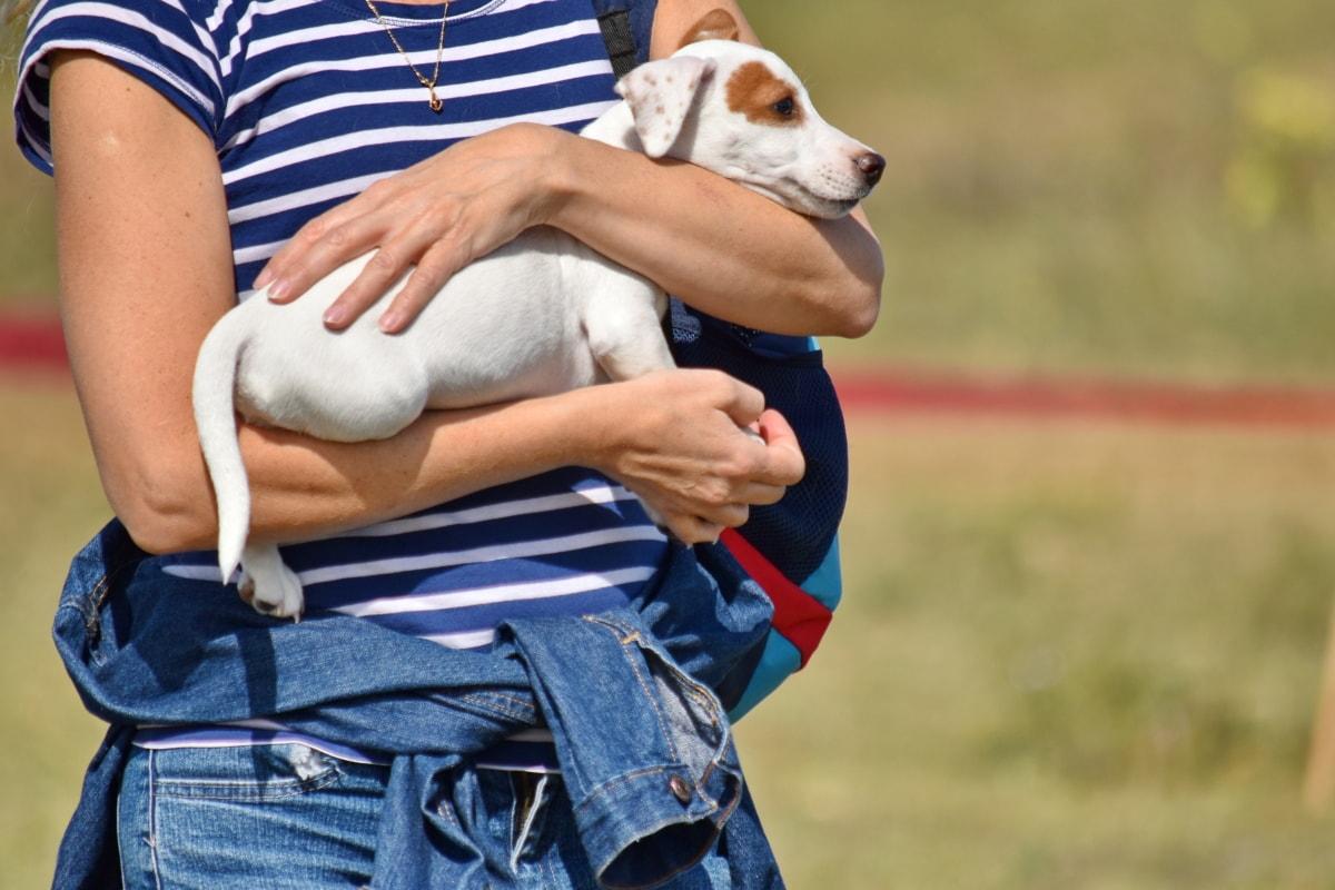狗, 狗, 小, 狩猎狗, 户外活动, 猎犬, 宠物, 草, 可爱, 夏天