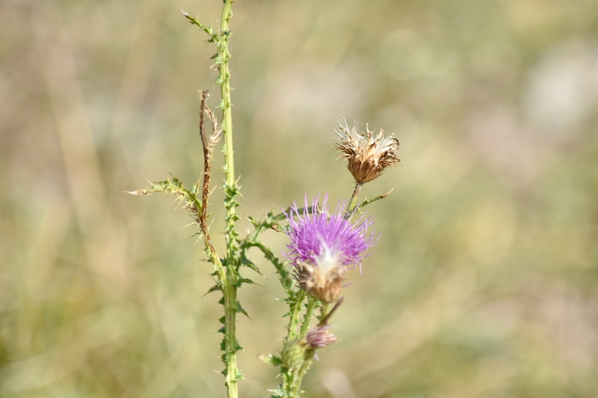 bunga, satwa liar, tanaman, mekar, ramuan, alam, di luar rumah, liar, musim panas, flora