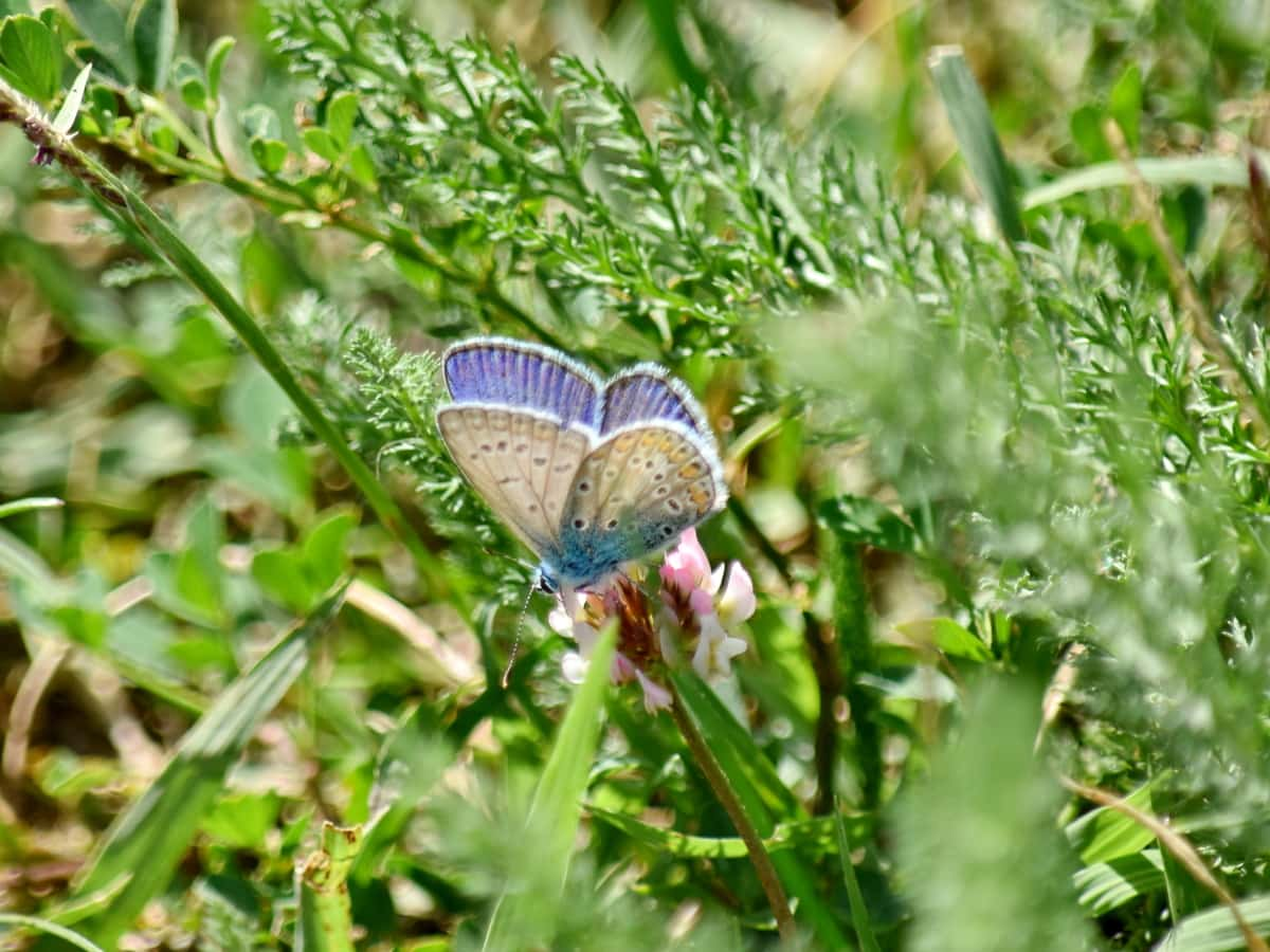 summer, insect, outdoors, nature, butterfly, animal, wildlife, flower, grass, wing