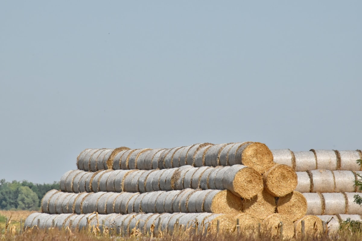 farmland, hay field, haystack, summer time, hay, straw, stacks, field, nature, countryside