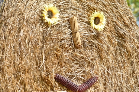 corn, decoration, face, funny, hay, still life, feed, straw, field, cereal