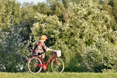 bicycle, enjoyment, forest, grandmother, lifestyle, nature, recreation, relaxation, walking, wheel