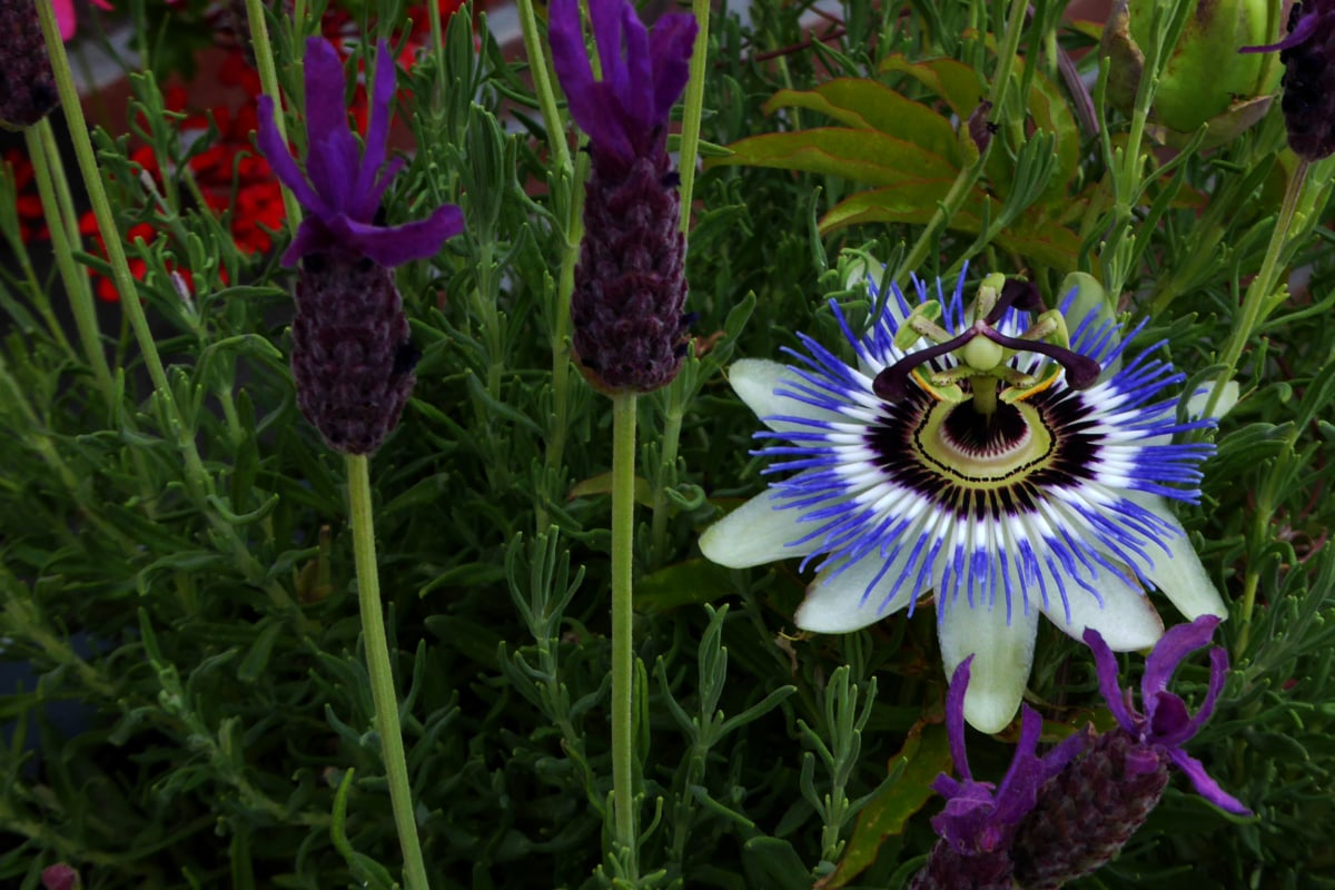 eksotiske, blomst knopp, blomsterhage, støvbærere, Tropical, gul, hage, blomst, natur, flora