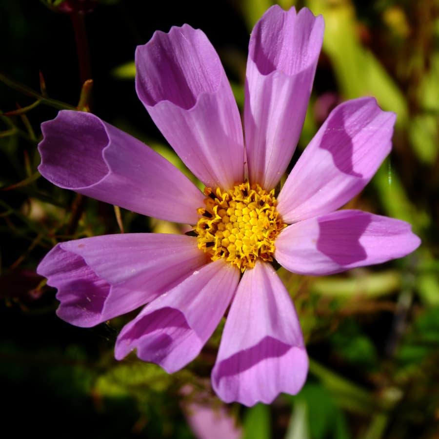 beautiful photo, details, exotic, free image, petals, pollen, purple, petal, plant, flower
