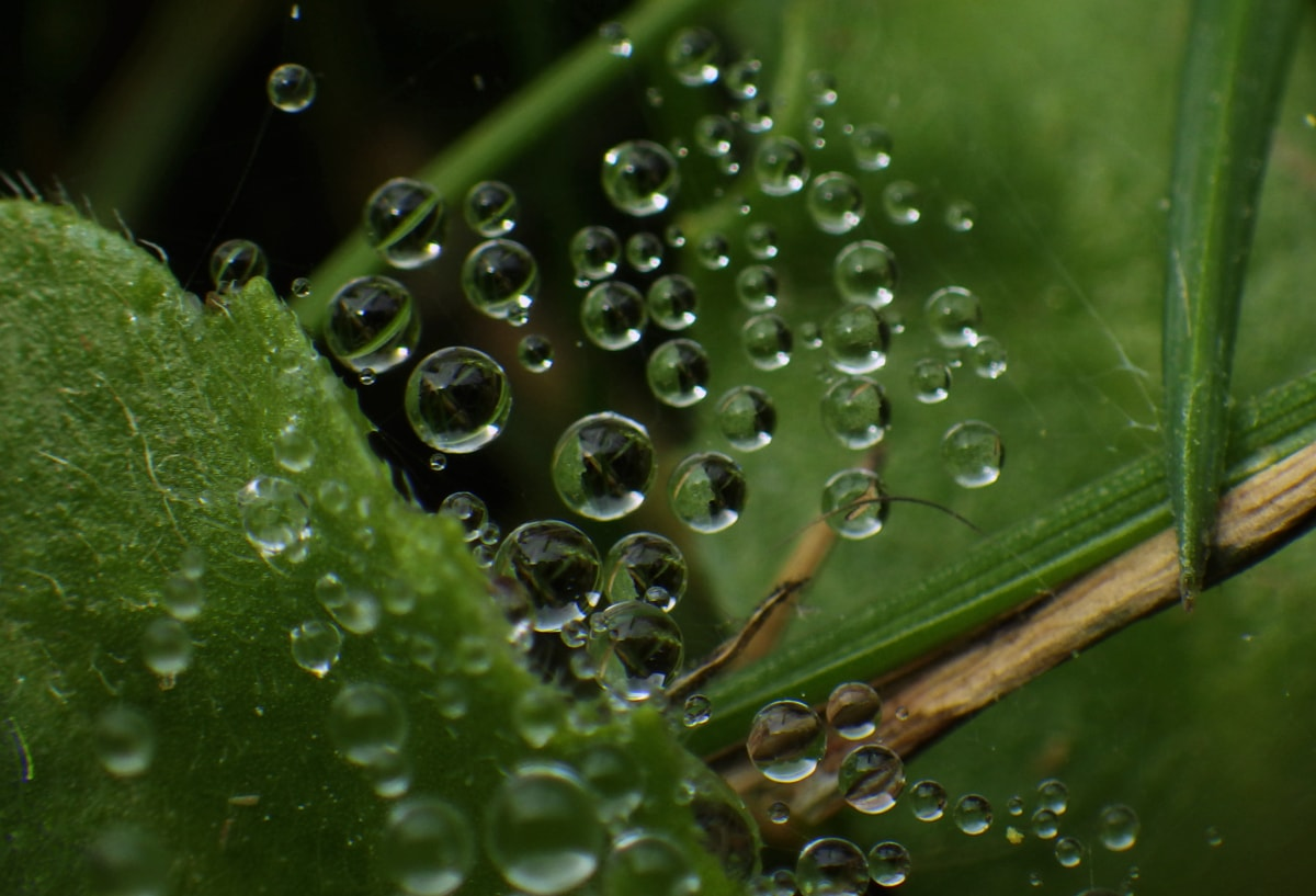 beautiful photo, bubble, detail, dew, free image, green leaves, macro, moisture, spiderweb, raindrop