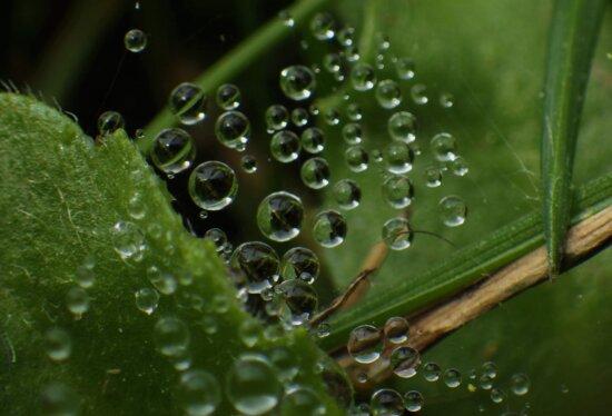 красиво изображение, балон, детайли, роса, свободен образ, зелени листа, макрос, влага, Паяжината, дъждовна капка