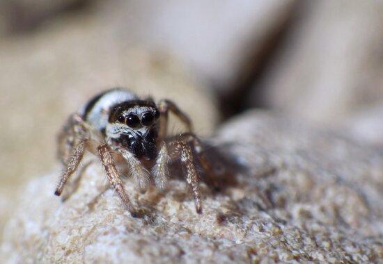 beautiful image, detail, eyeball, eyes, insect, legs, macro, spider, arachnid, animal