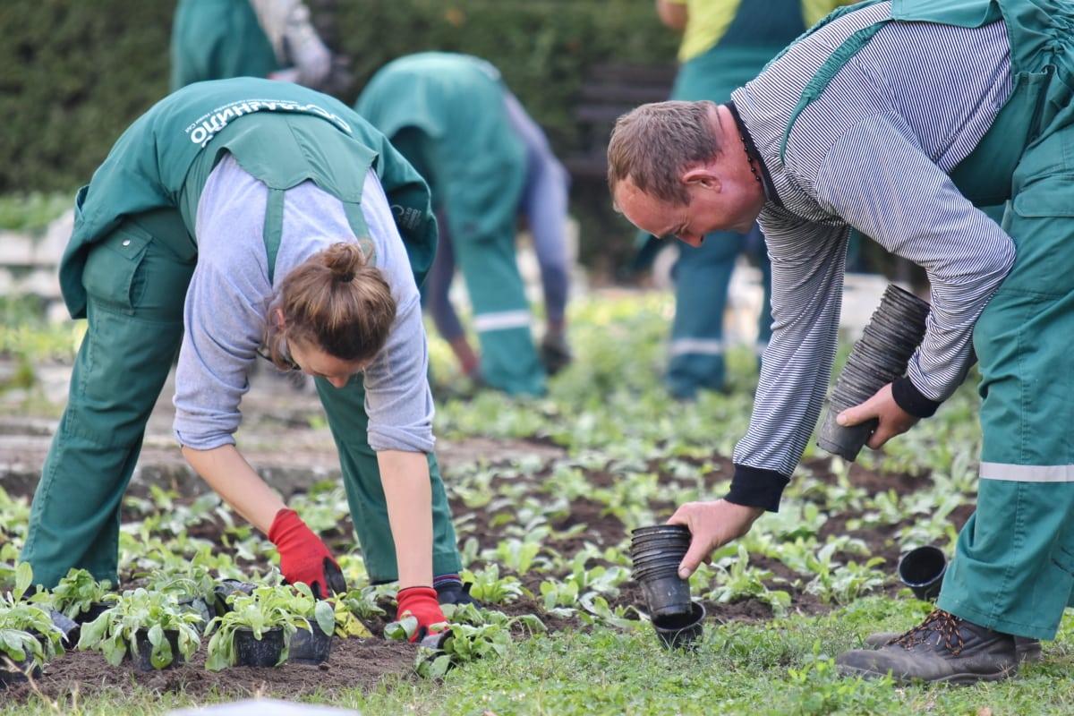 градинар, градинарство, растителен материал, засаждане, работа в екип, трева, земеделски производител, лице, жена, на открито