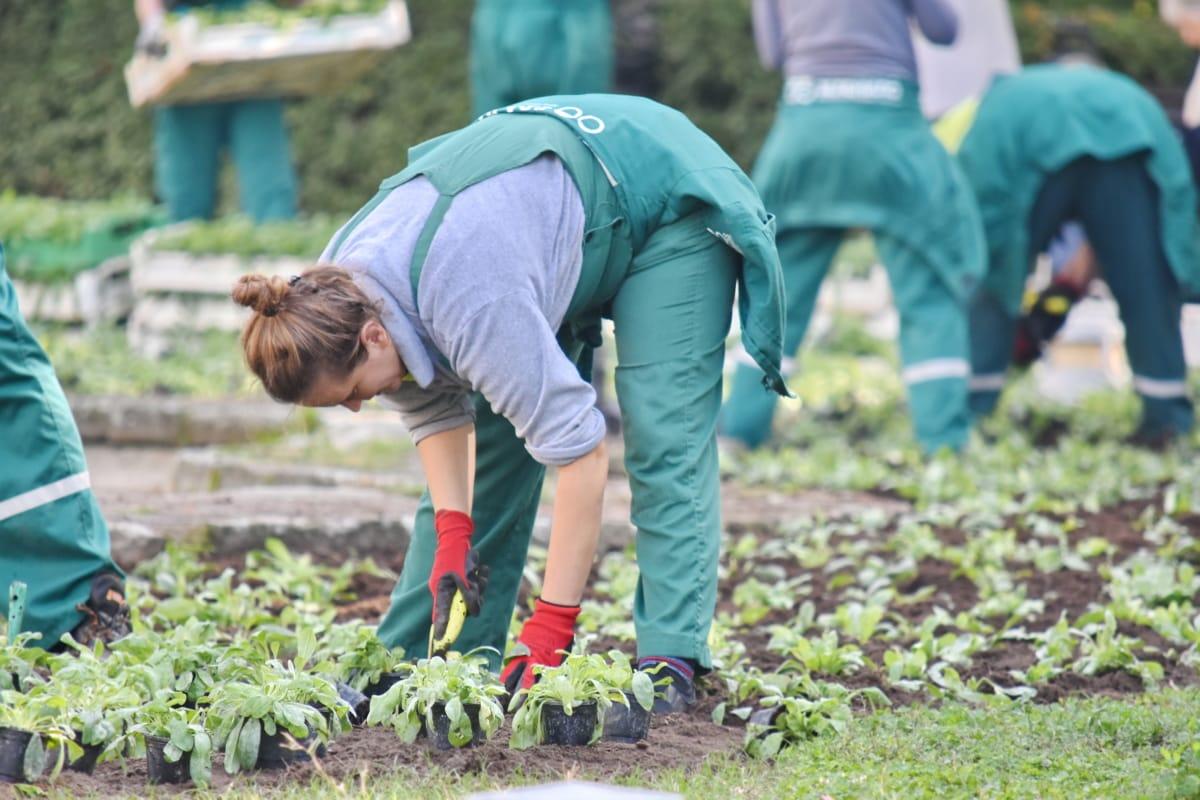 dipendente, giardino di fiore, giardinaggio, Fioriera, impianto, agricoltore, persone, erba, persona, donna