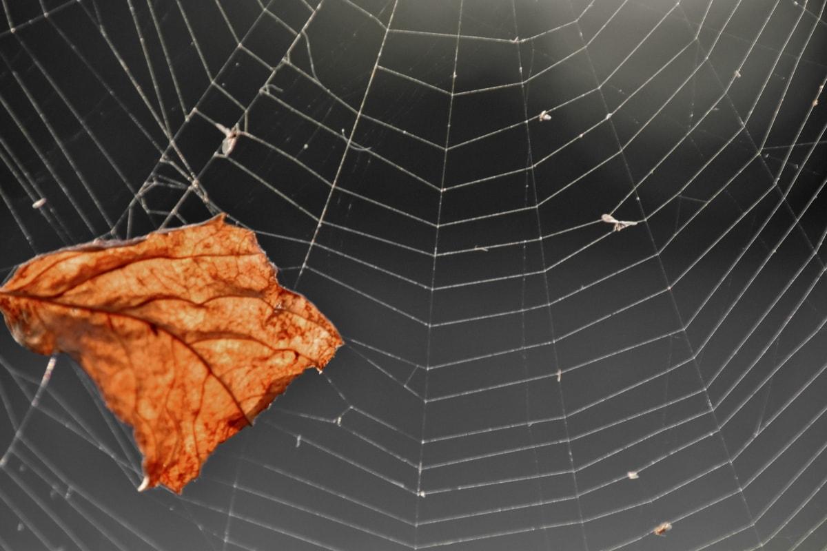 茶色, 乾燥, 葉, クモの巣, クモの巣, トラップ, クモの巣, Web, 自然, パターン