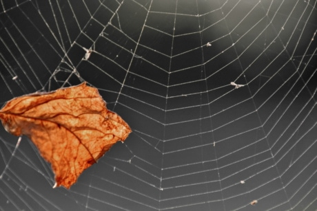 brown, dry, leaves, cobweb, spider web, trap, spiderweb, web, nature, pattern