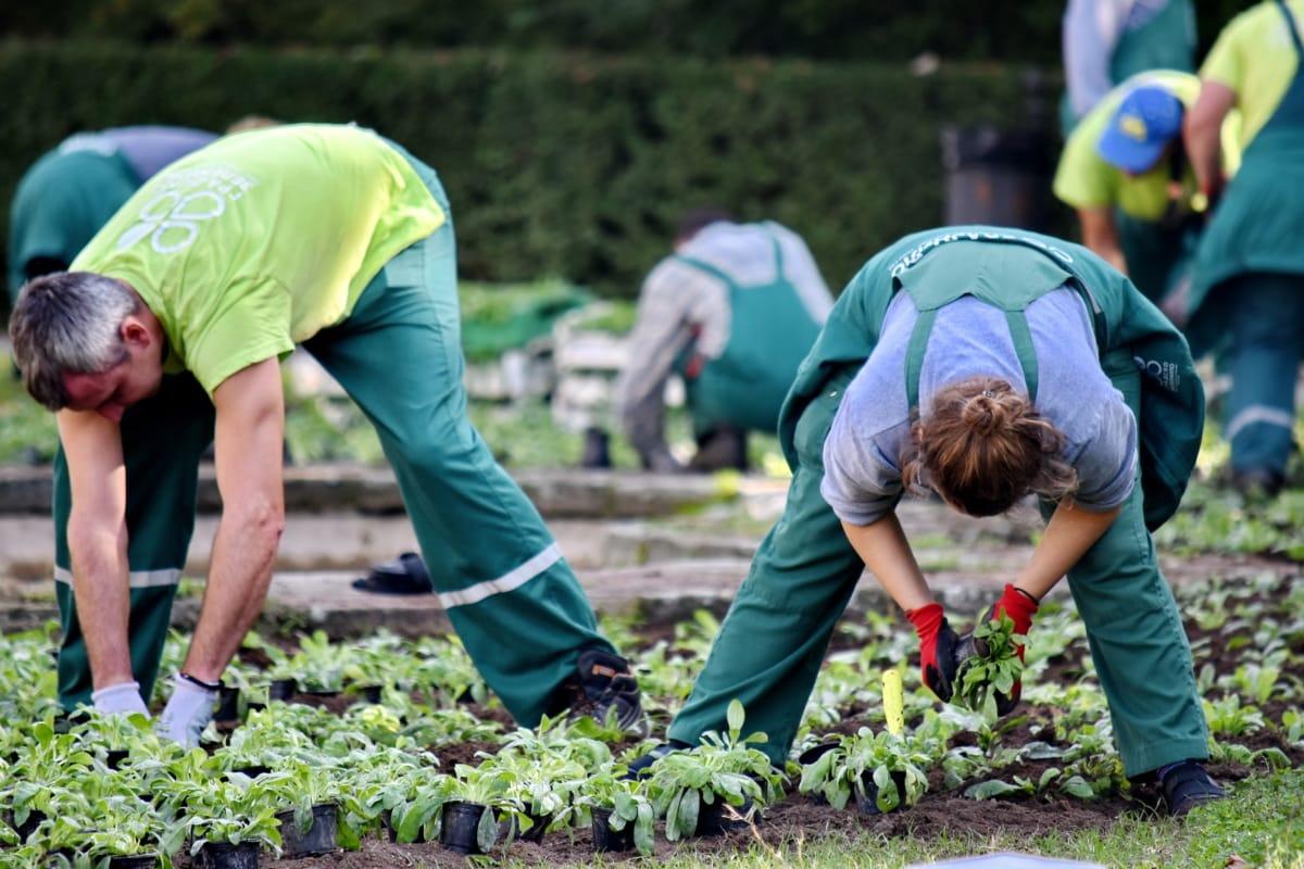 landbouw, Tuinieren, broeikasgassen, mensen, plantaardig materiaal, plantenbak, boer, persoon, gras, vrouw