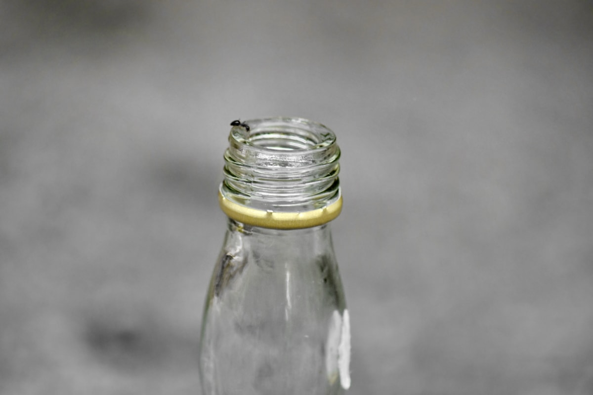detail, focus, glass, grey, insect, container, bottle, purity, outdoors, still life