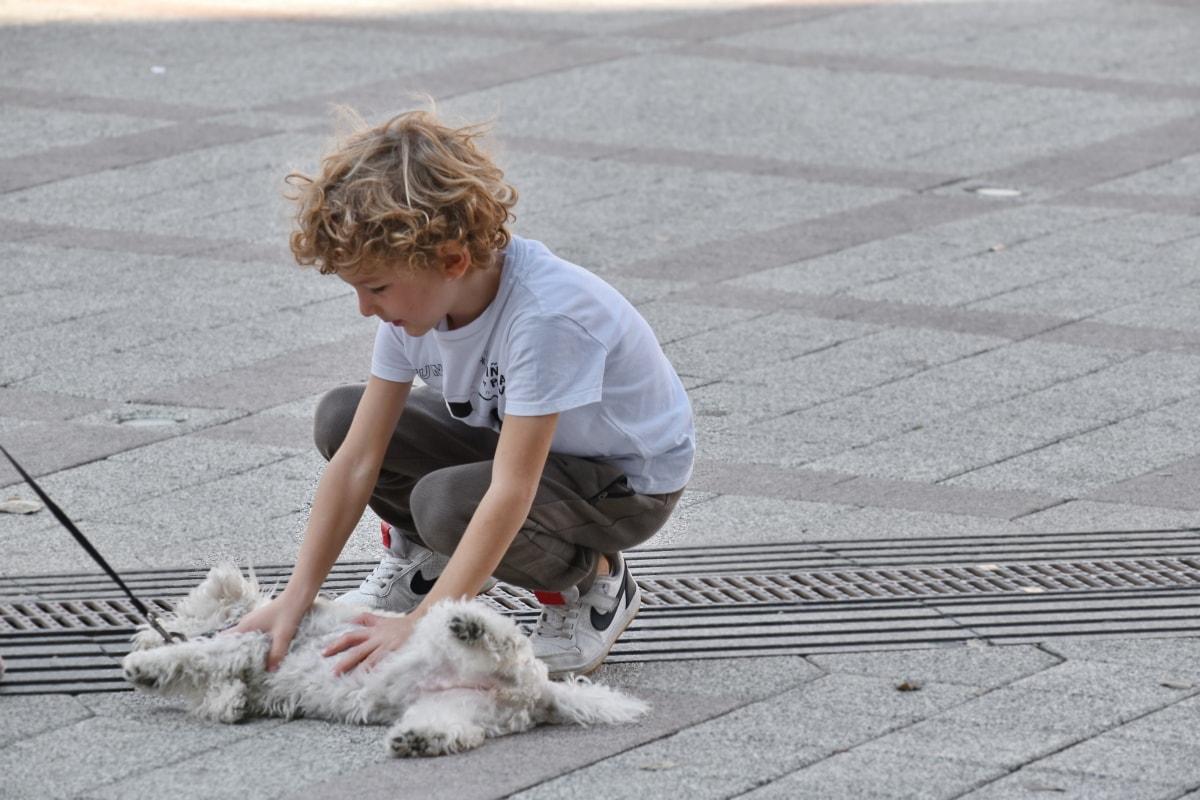 boy, dog, enjoyment, street, road, pavement, canine, asphalt, child, cute