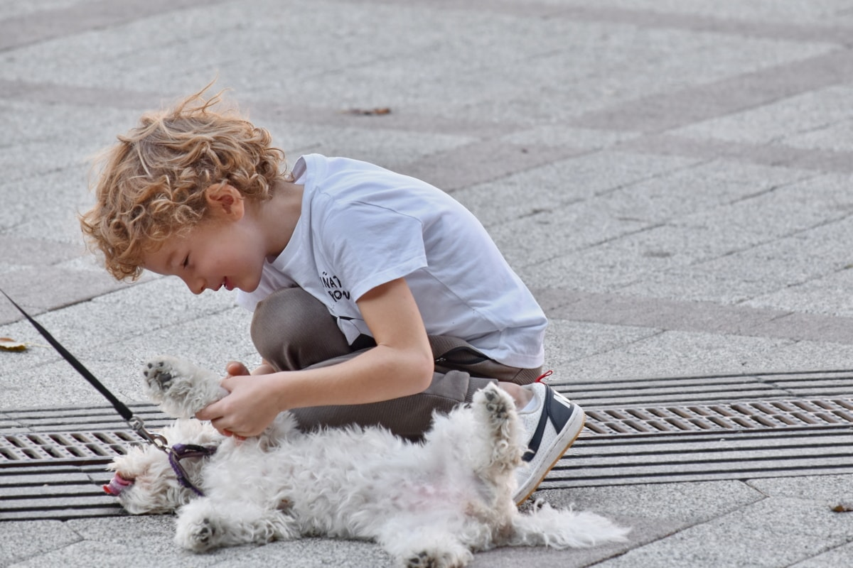 blonde haren, jongen, kind, bestrating, speelse, puppy, Straat, hond, schattig, huisdier