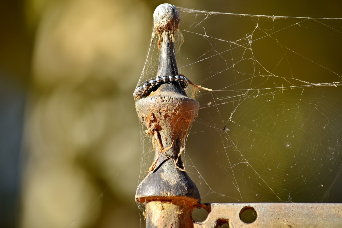 cast iron, detail, metal, object, spider web, nature, garden, color, old, hanging