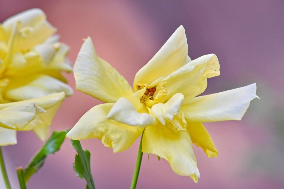 kabur, Taman bunga, fokus, mekar, bunga, alam, bunga, kelopak, tanaman, mekar