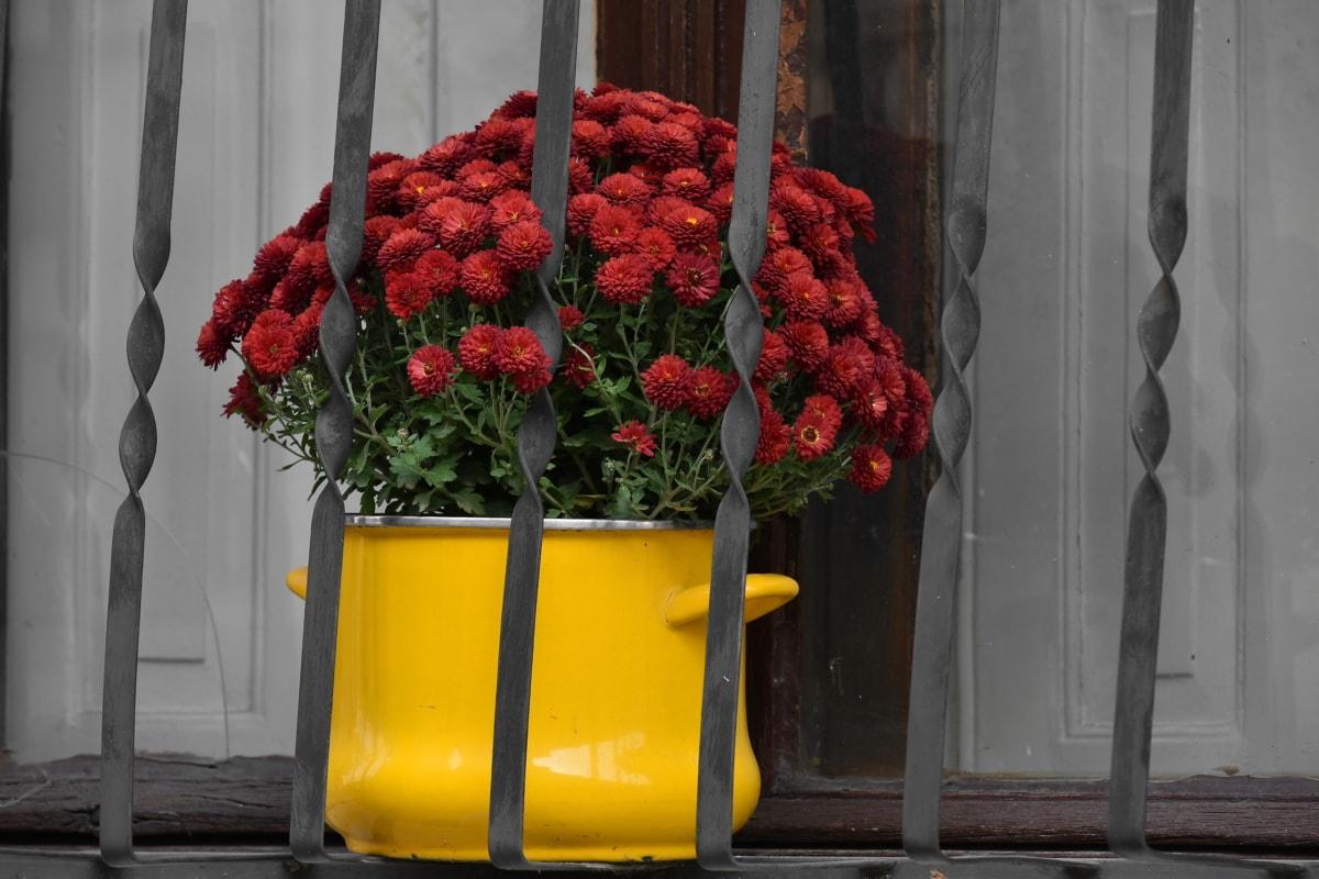 장식, 화분, 창문, 꽃, 꽃, 자연, 정원, 플로 라, 장식, 여름