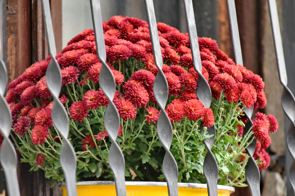 cast iron, flowerpot, still life, window, flower, outdoors, summer, leaf, blooming, color