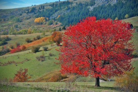 autumn season, Bosnia and Herzegovina, hillside, tree, plant, shrub, autumn, park, landscape, leaf