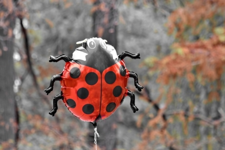 balloon, helium, ladybug, toy, insect, beetle, bug, nature, outdoors, color