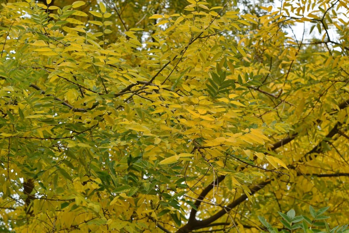 blad, anlegget, flora, blader, treet, natur, løvverk, skog, sesongen, gren