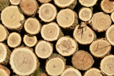 hardwood, light brown, texture, wood, bark, firewood, round, stacks, upclose, old