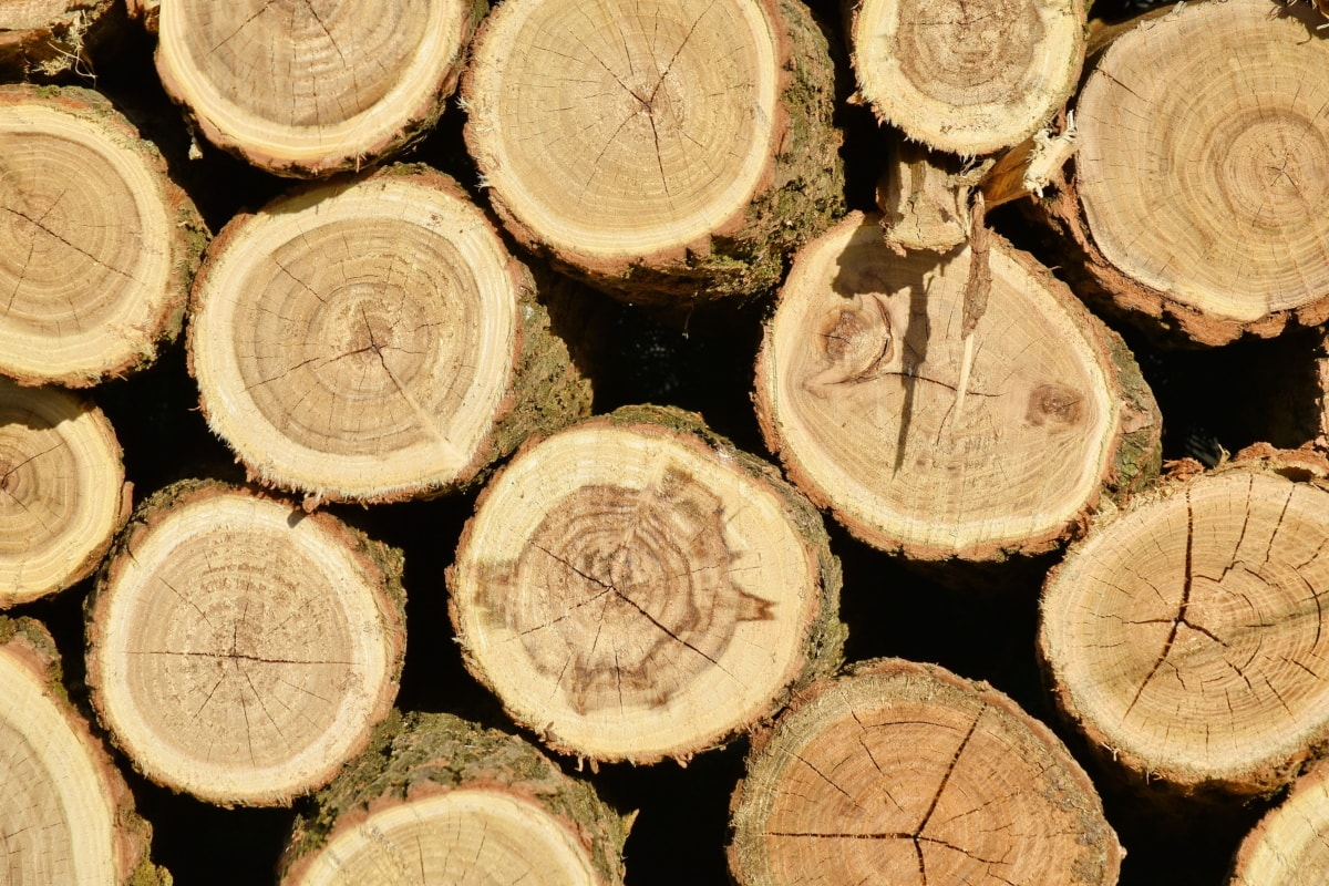 bark, firewood, wood, round, trunk, tree, stacks, texture, pile, brown