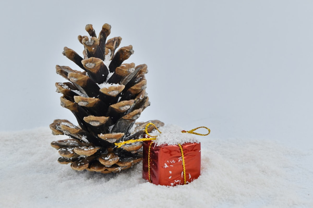 conifer, gift, snow, tree, winter, christmas, cold, frost, wood, pine