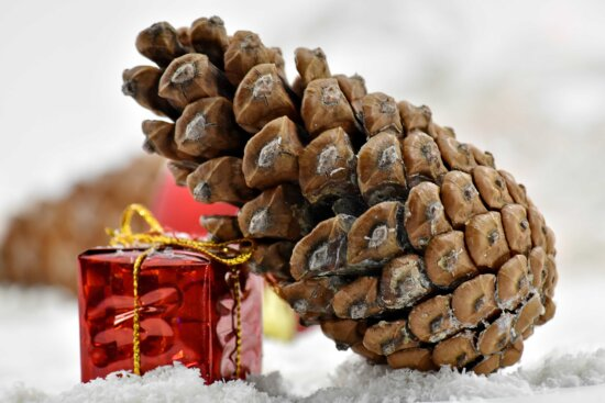conifer, frost, gift, ice crystal, package, red, snowflakes, still life, winter, bean