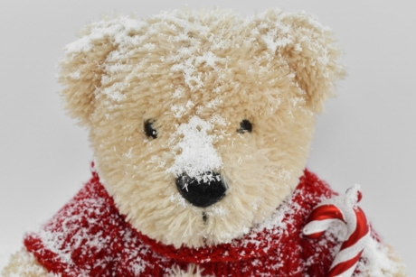 head, snow, snowflakes, sweater, teddy bear toy, toy, cute, bear, winter, christmas
