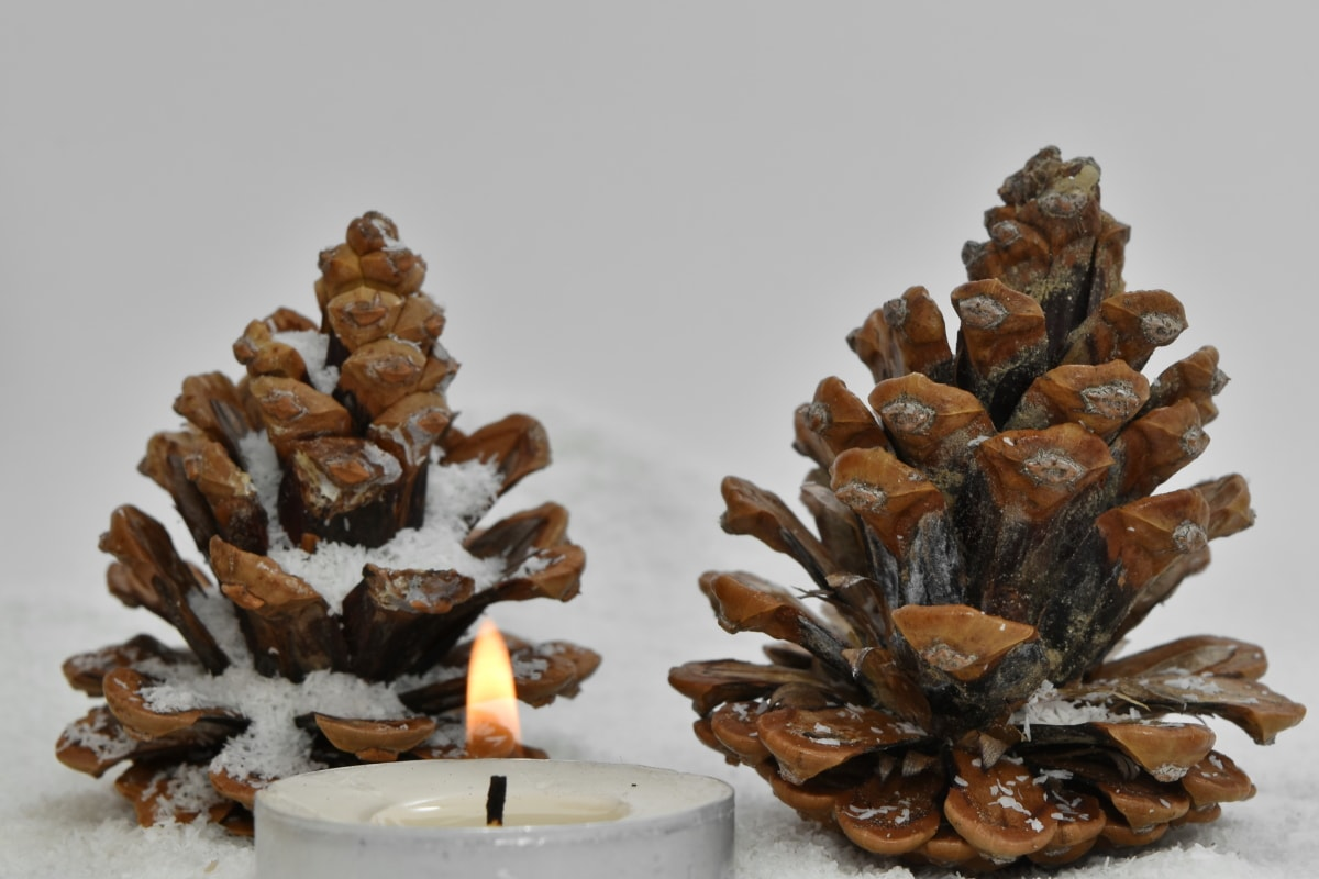 candlelight, cone, conifer, holiday, snow, art, blur, brown, christmas, decoration