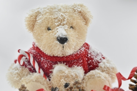 christmas, frost, gifts, sitting, teddy bear toy, toy, soft, gift, winter, snow